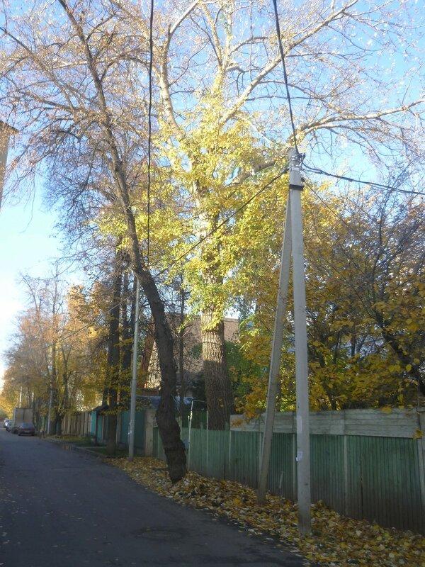 Поселок Сокол. Улица Верещагина.