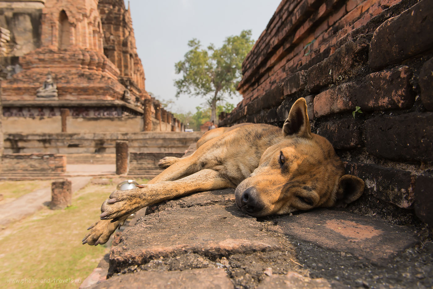 Фотография 10. Стражник задремал... Как мы съездили на экскурсию в исторический парк Сукхотай (Sukhothai Historical Park)