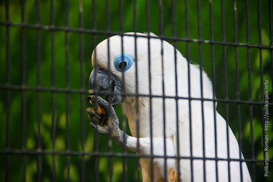 0 c4fb4 9e5f37d1 orig Парк птиц Jurong в Сингапуре