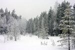 Лес по лыжне на фонтаны