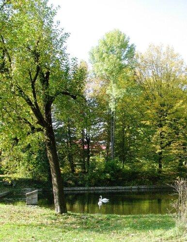 На пруду Поповича - лебеди, а среди деревьев - Турецкий домик