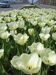 Весна в Краснодаре.