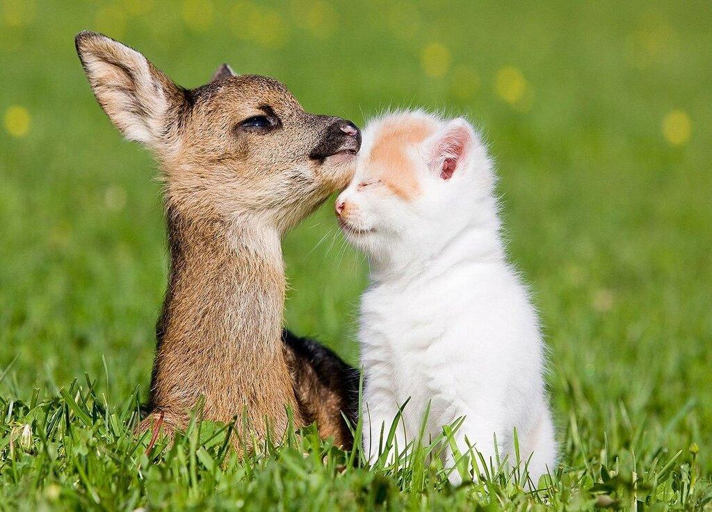 wpid-kitten_and_little_deers.jpg