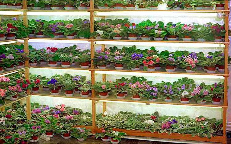 Разведение цветов вакансии зеленоград