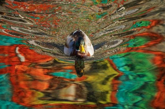 Потрясающие иллюзии на фотографиях с двойным смыслом 0 17c1ce 3732c6b9 orig