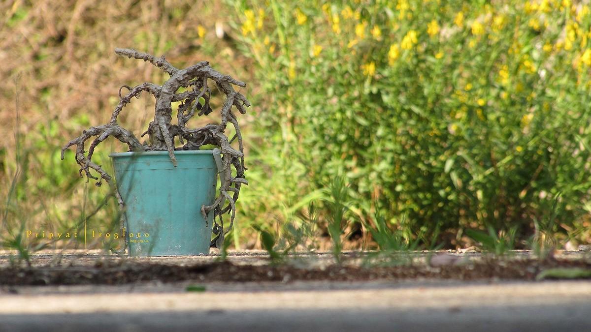 1. Посаженные людьми растения превратились в окаменевшие стручки. Но выпущенная в пространство город