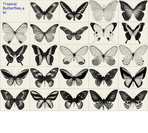 Бабочки, насекомые / Butterflies, insects *