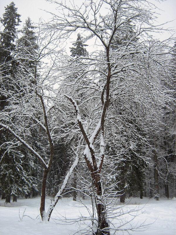 Кружевное деревце