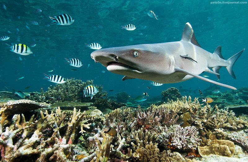 Что сокрыто в глубинах океана какие