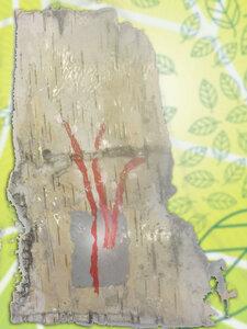 В преддверии Вербного воскресения детки в нашем Духовно-просветительском центре познакомились с настоящей живой вербой и новым, тоже живым, материалом в работе- берестой