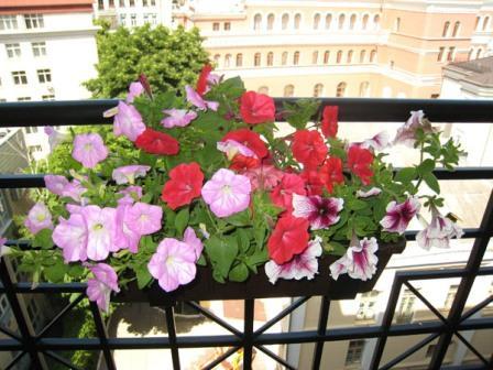 orangereia-na-balkone-15.jpg