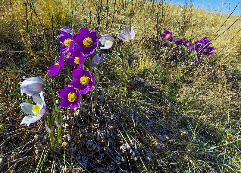 день картинки цветы хакасия одеть резиновые перчатки