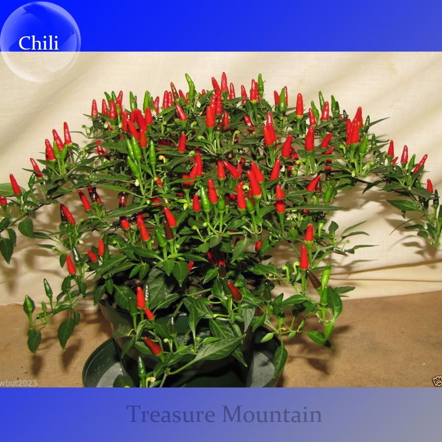 Heirloom Thai Sun Hot Pepper Capsicum Annuum Ornamental Chili Seeds