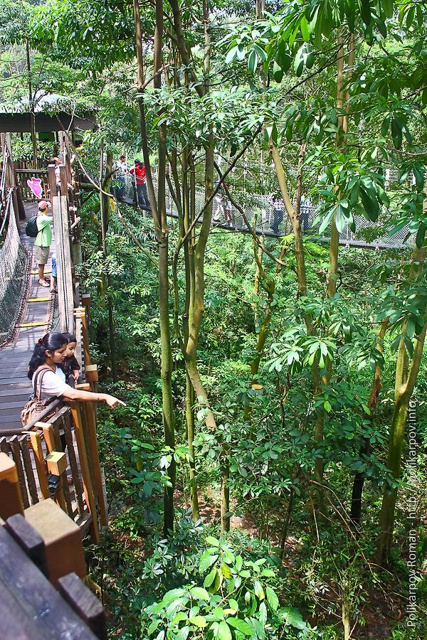 0 c4fd7 8a485f2d orig Парк птиц Jurong в Сингапуре