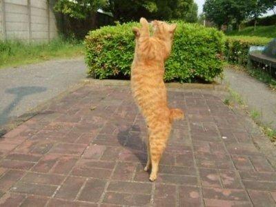 Аленушка — «кот акробат» на Яндекс.Фотках