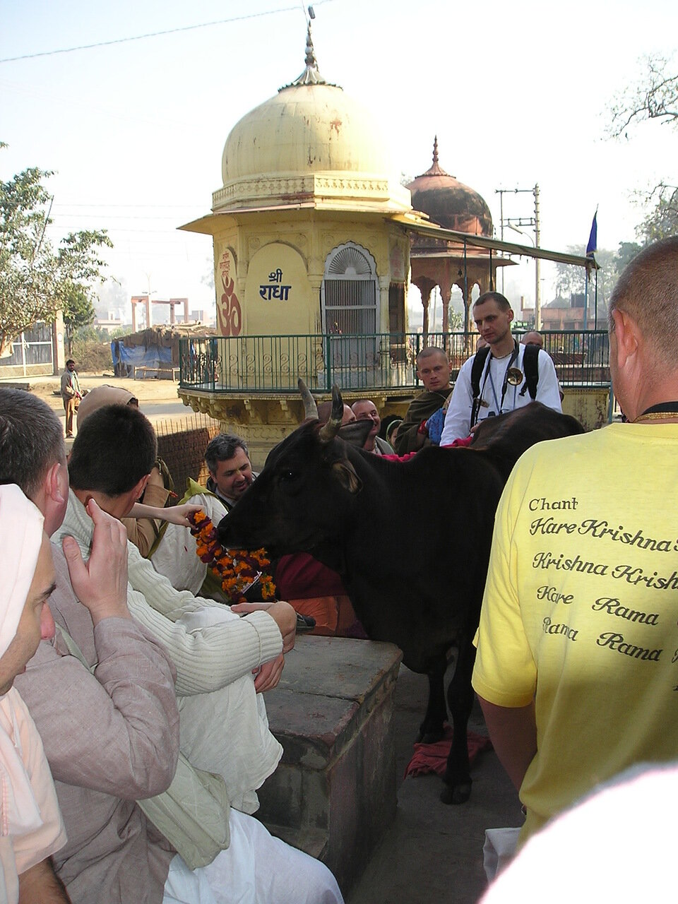 Вриндаван, Индия, русские паломники и индийская корова слушают лекцию Госвами Махараджа на русском языке