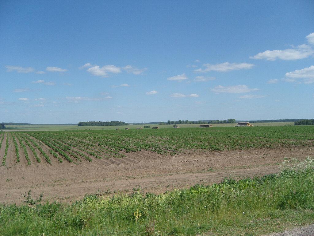 поля и перелески вдоль Осетра