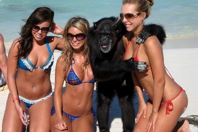 В Одессе запрещено фотографироваться с животными