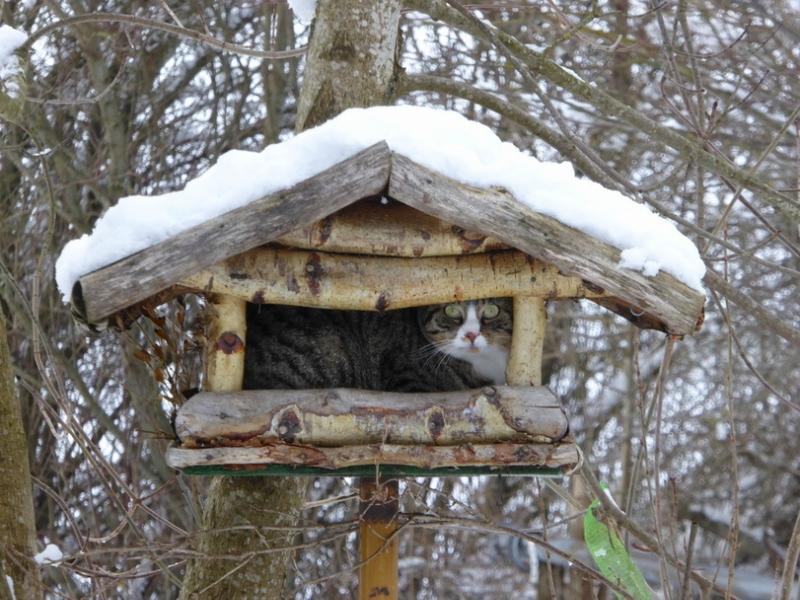 котэ-зима-снег-кормушка-для-птиц-2820507.jpeg