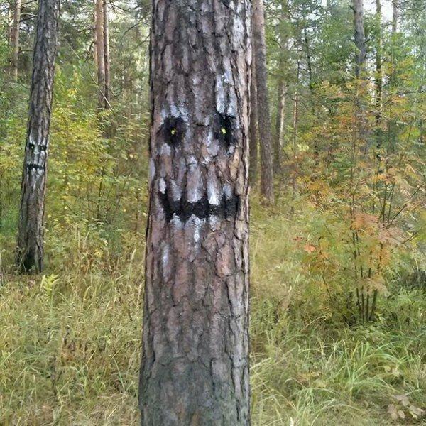 Правильное оформление леса