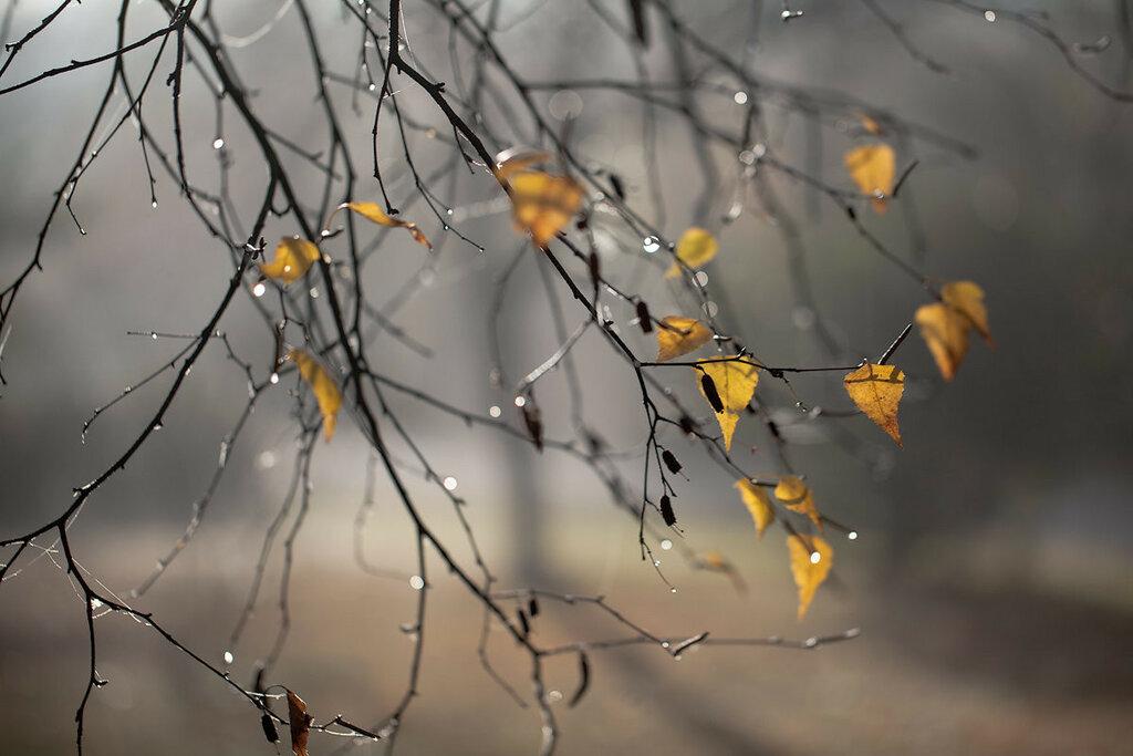 Грустные картинки осени, праздником комсомола открытка