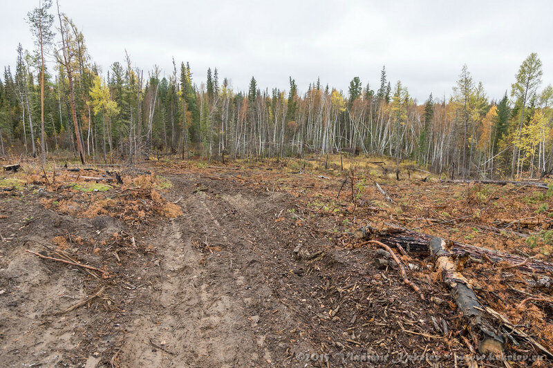 Лес. Что остается после вырубки, 15092