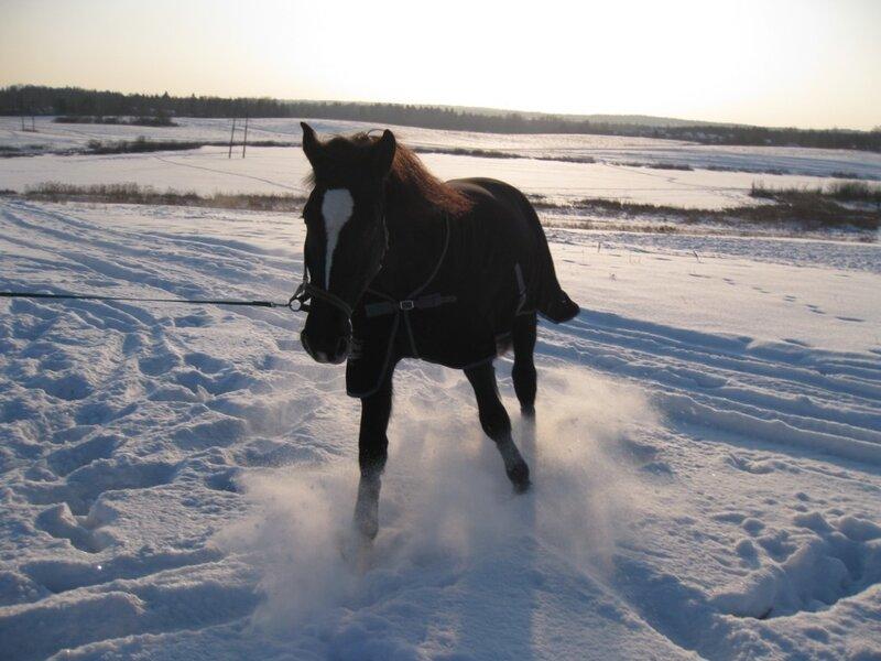 Конь в снегу