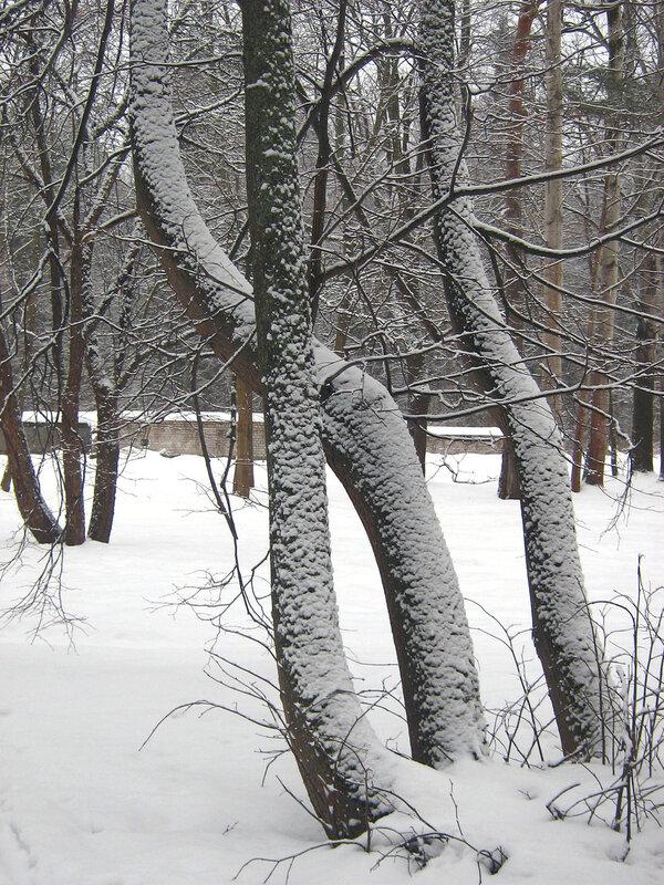 Деревья красиво укутанные!