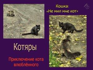 Приключения кота влюблённого. Ч.2