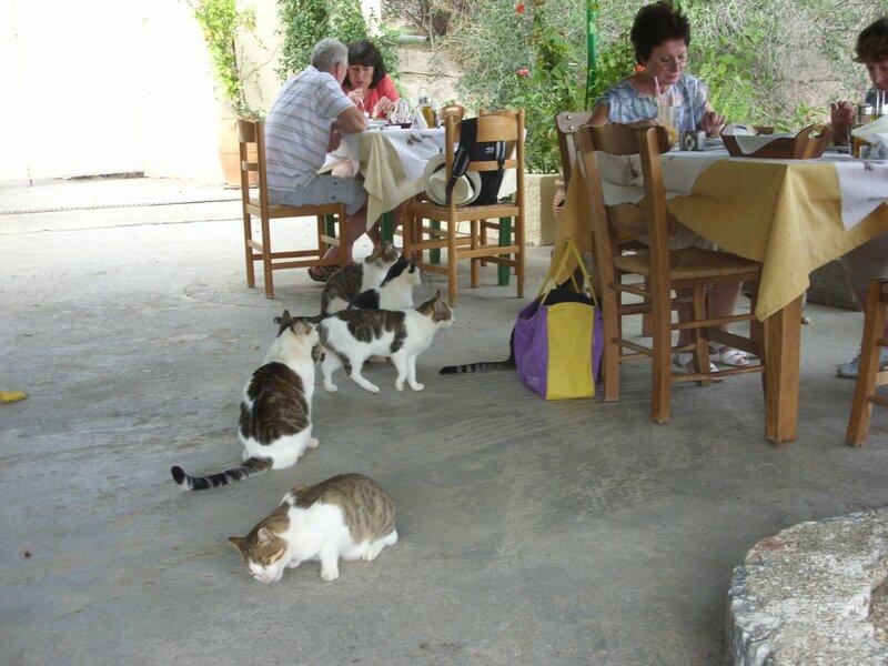Коты в таверне