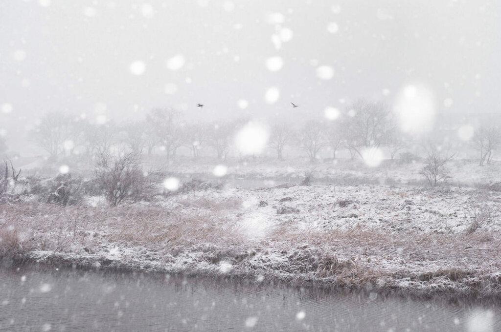 Let it snow, Asako Shimizu0.jpg