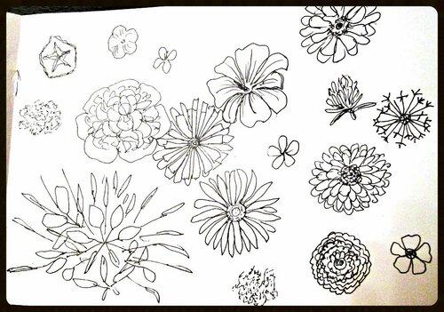 неделя1. цветы
