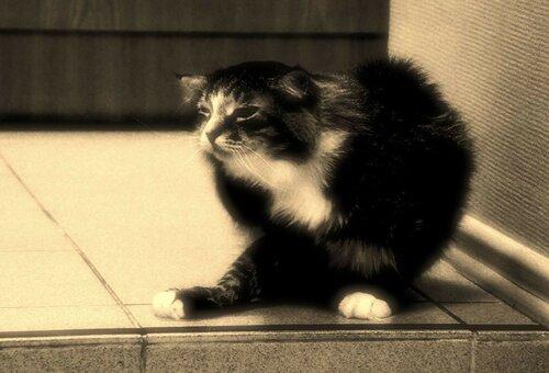 Кот Василий из приюта догпорта