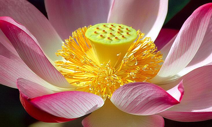 Цветочки Susan Evilla Pindiyath