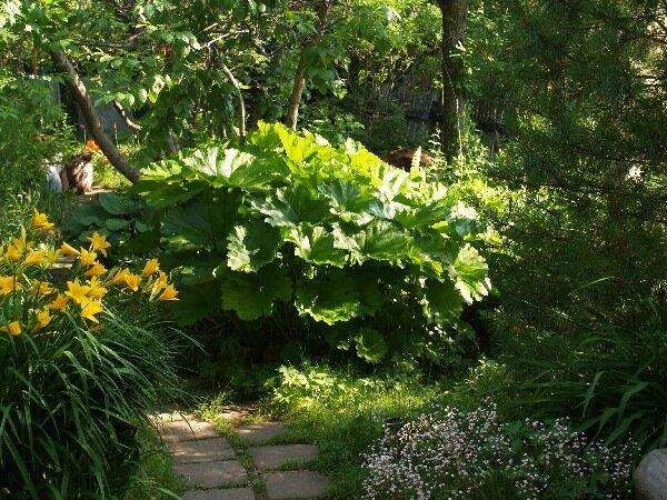 Растения растущие в тени на даче