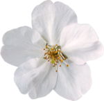 flower (10).png