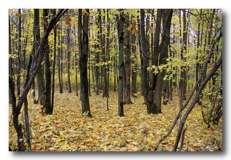 Сейчас Чоботовский лес считается частью Баковского лесопарка. 1a0e4e73627d1