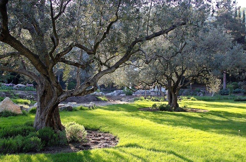 Под сенью вековых олив