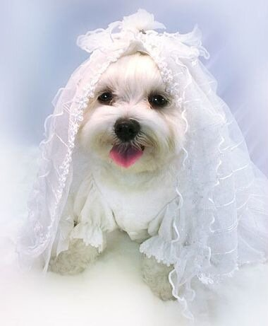 Свадьбы домашних любимцев