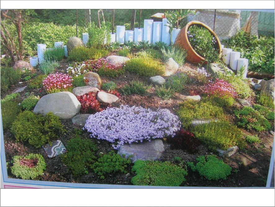 Альпийская горка с водоемом на даче какие растения нужны