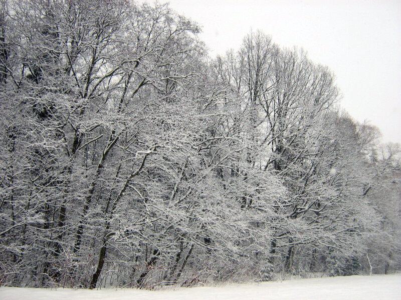 Черно-белый лес