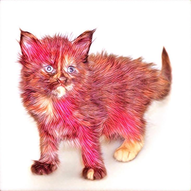 картинка котенка