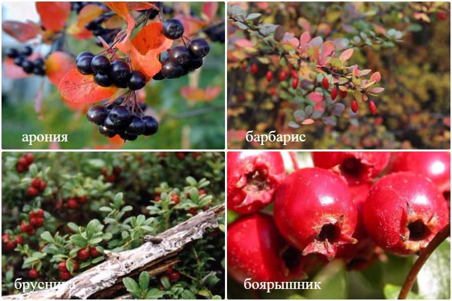 15 полезных плодово-ягодных растений для вашего сада