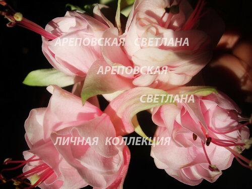 НОВИНКИ ФУКСИЙ. - Страница 5 0_151021_d049edd3_L