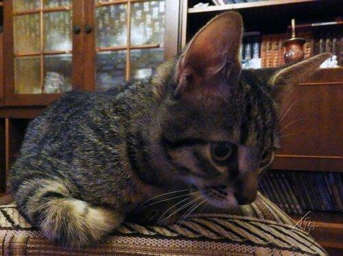 Обычный маленький котенок