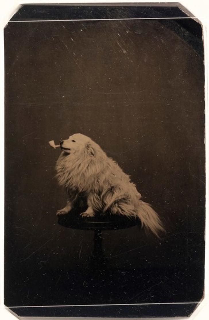 Дурацкие фотографии с животными стали делать ещё в 1875 году.