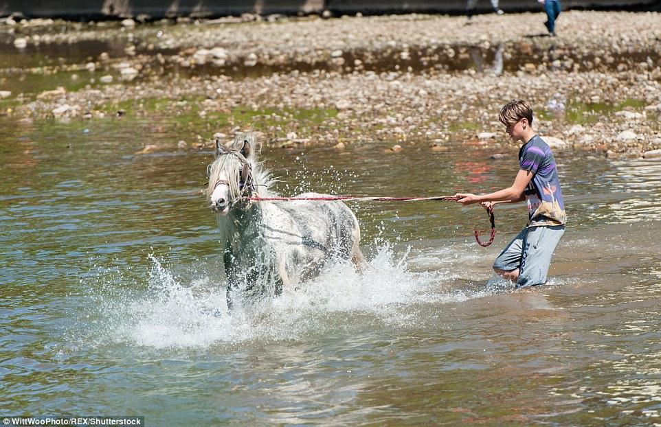 Подросток пытается удержать разыгравшуюся лошадь.