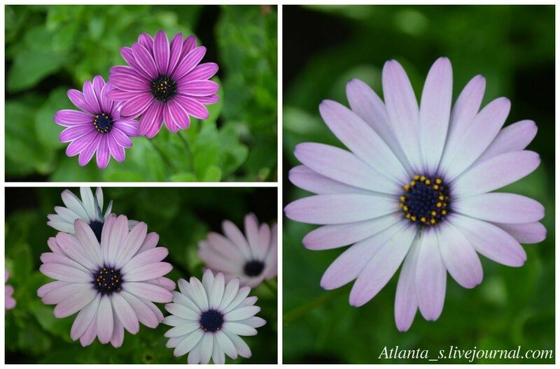 watermarked - цветы.jpg