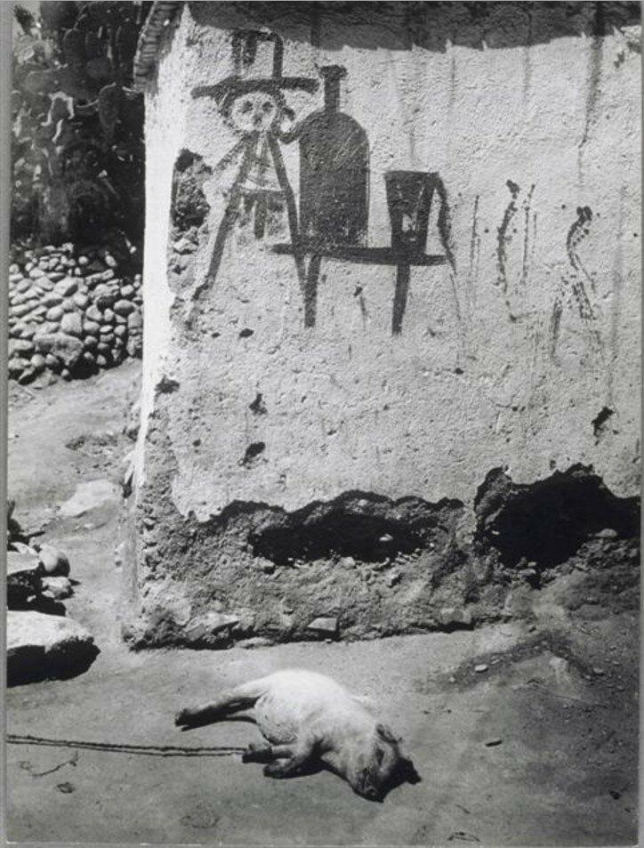 1950. Спящая свинья в Гранаде