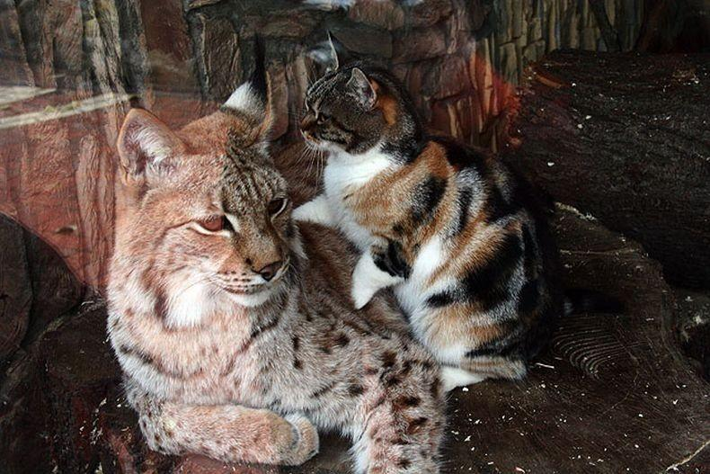 кот пробрался в зоопарк и завел себе необычного друга